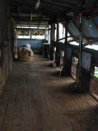 inside the woolshed, where I saw hundreds of sheep shorn ...